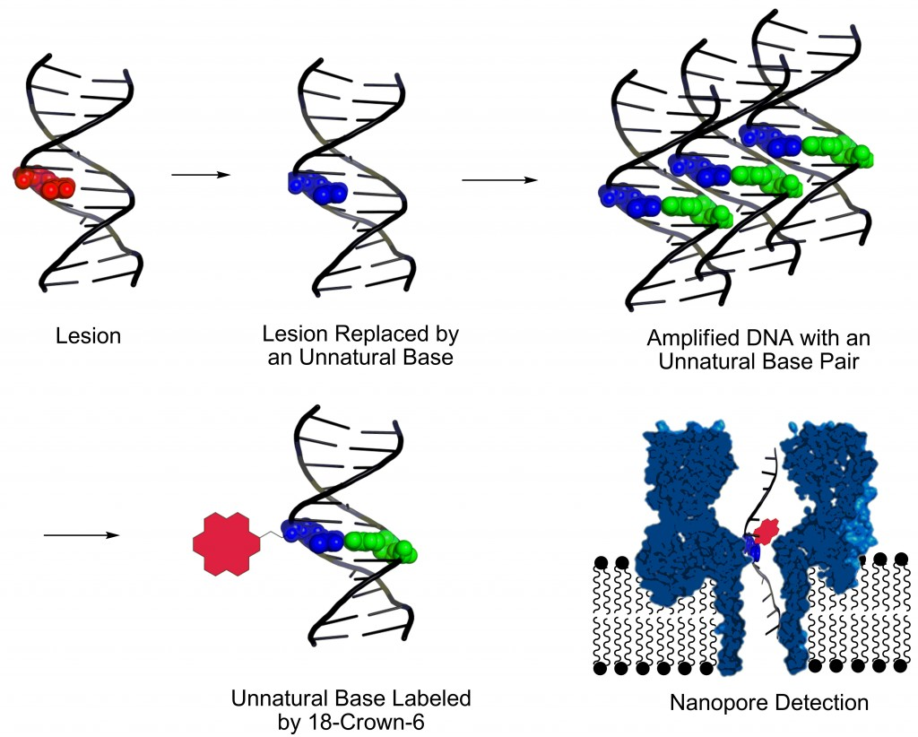 DNAdamageGraphic