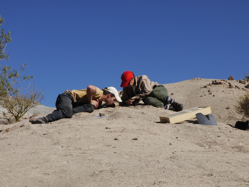 Co-author Adriana Mancuso (right) and Juan Martín Leardi (left) excavate the skeleton of the early mammal relative Massetognathus. This was also the site of one of the dated samples in the study.