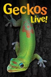 Geckos Live