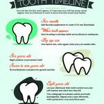 Tooth.Timeline.v2