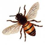 bee-150x150