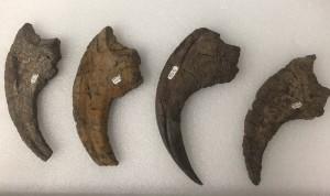 UMNH.VP.16420 Nothonychus claws