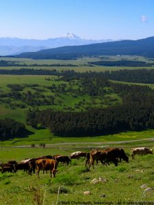 Sarıkamış Forest is a fragmented forest dominated by human activity including livestock grazing and timber extraction.