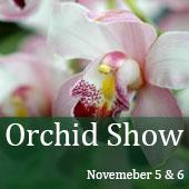 orchid-show