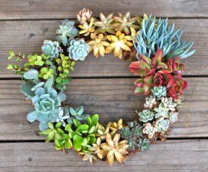 Living succulent wreath.