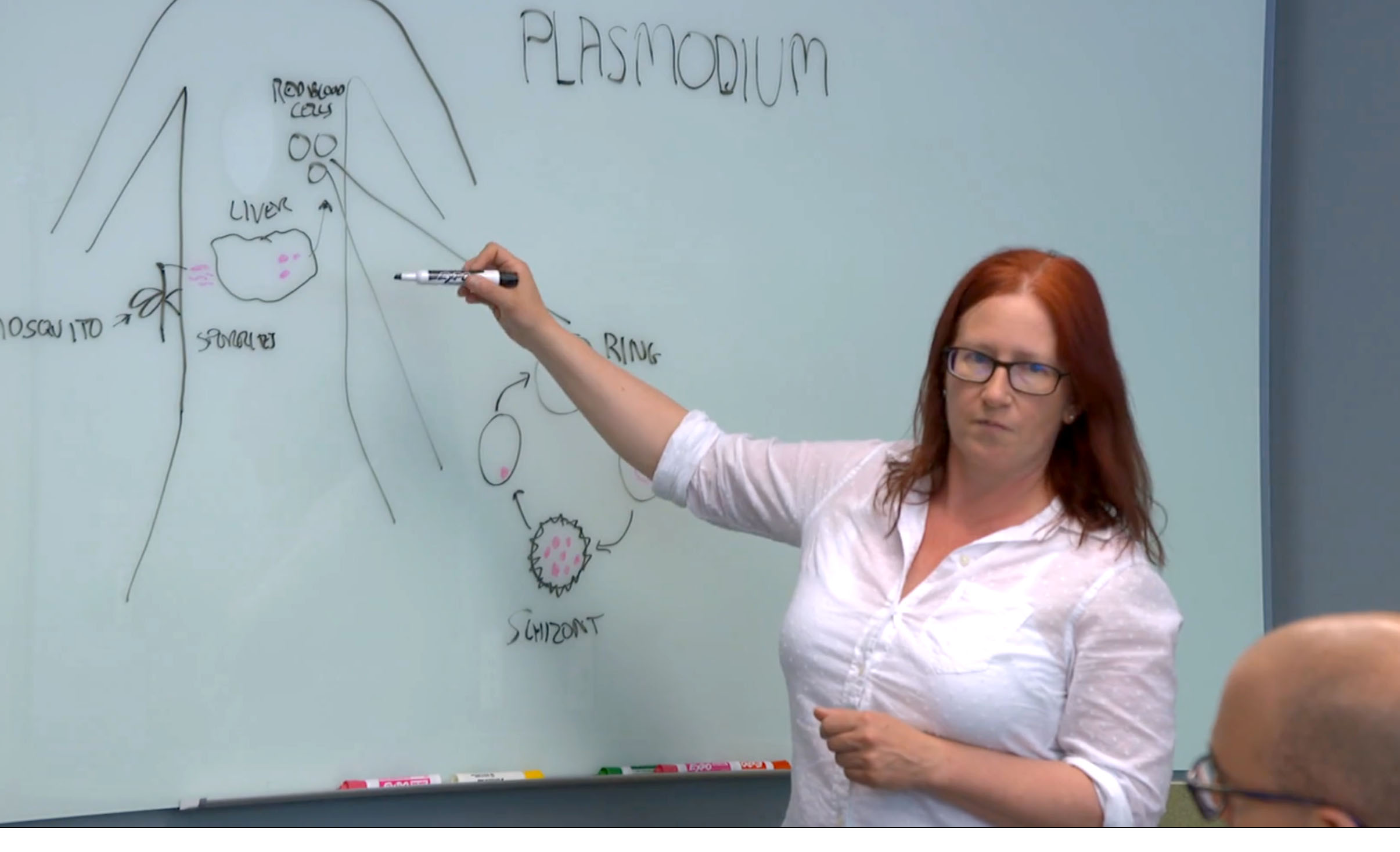 Pathologist Tracey Lamb stands at a whiteboard explaining to a group the lifecycle of the Plasmodium falciparum parasite by drawing a diagram of a human body on the board.