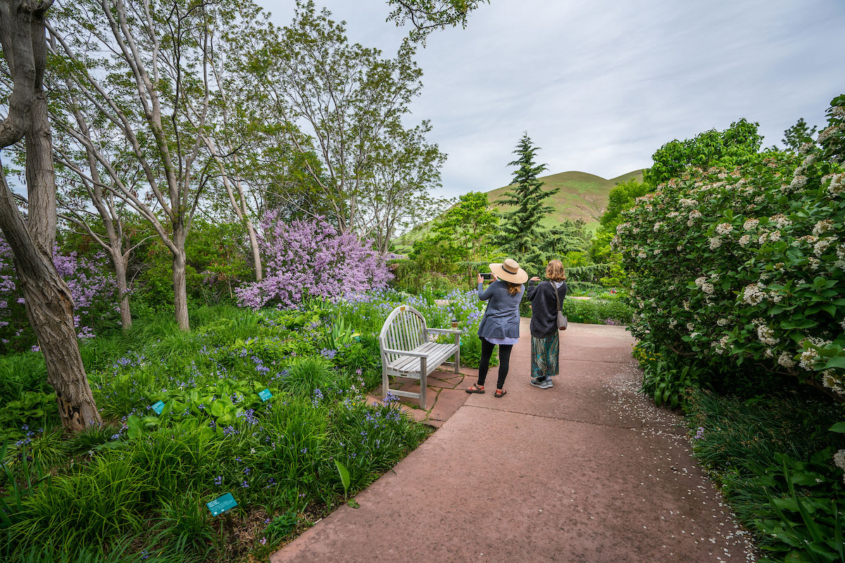 Two people look at pink flowers in a flower garden.
