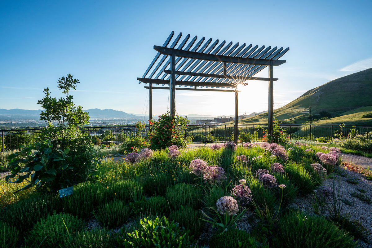 A back-lit over head trellis over a water conservation garden of drought-tolerant plants with pink flowers.