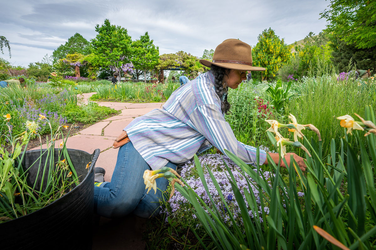 A woman working in a fragrance garden full of flowers, irises.