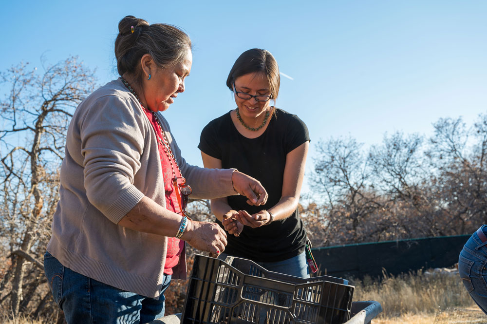 Cynthia Wilson, director of the Utah Diné Bikeyah Traditional Foods Program (right), and her mother Elouise, harvest the Four Corners potato at Red Butte Garden.