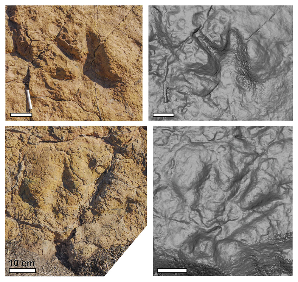 Four panels of the dinosaur footprint arranged in a square. The left two are photos and the right two are 3D models of the print.