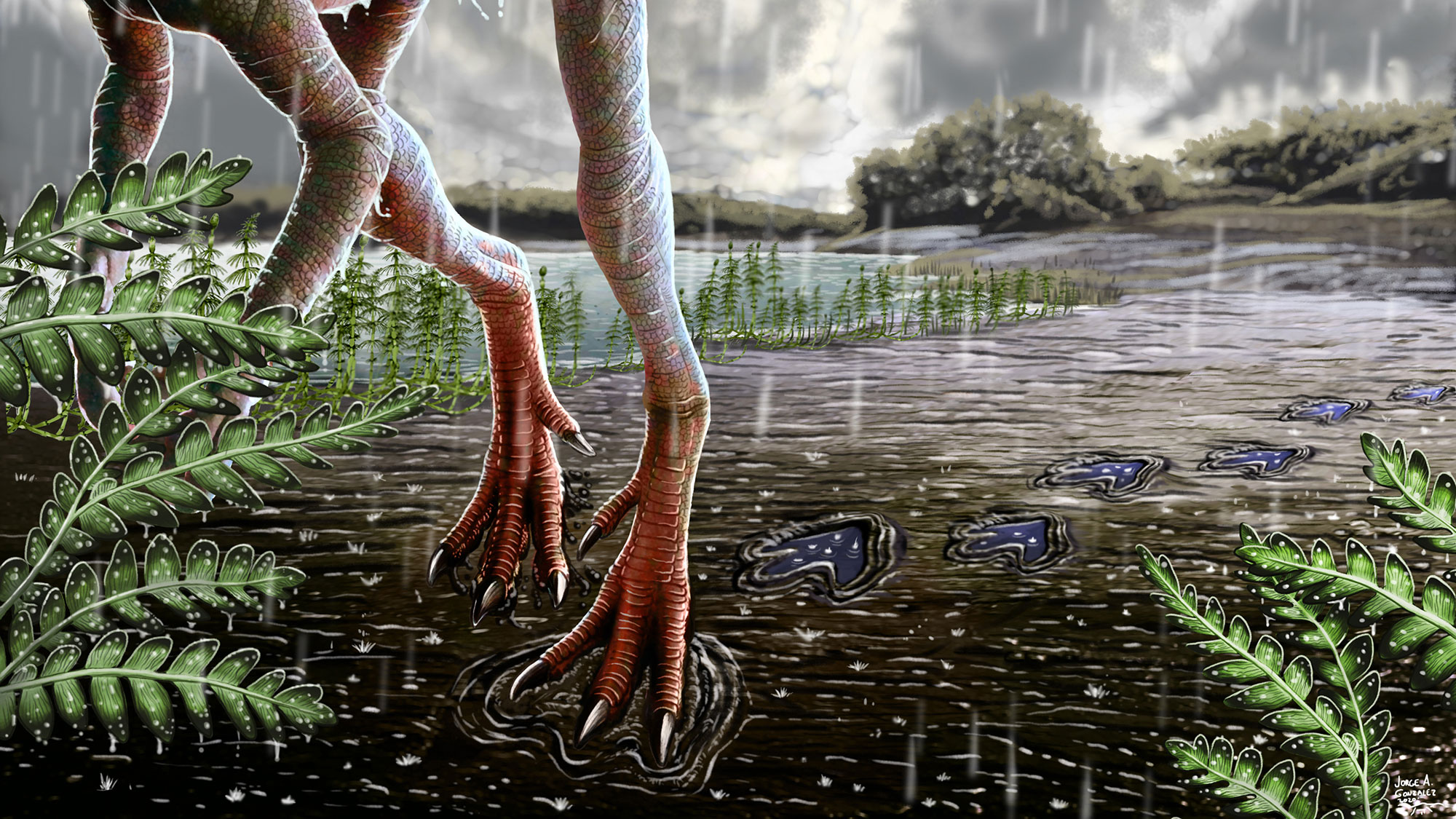 An illustration that imagines what the dinosaur-like creature looked like while leaving the footprint millions of years ago. It's feet look like giant chicken feet - three toed with claws. Ferns are scattered in the background..