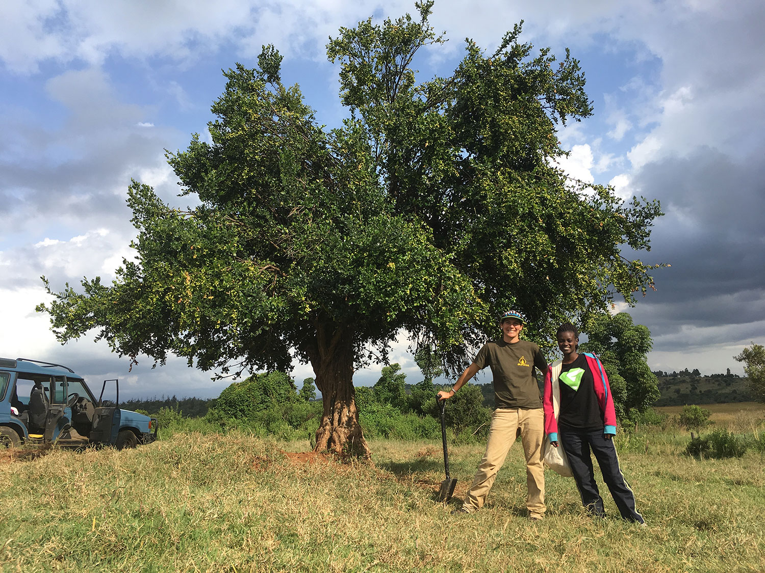 Two researchers stand in front of Acokanthera schimperi, also known as the poison arrow tree. Sara B. Weinstein, a white woman, is on the right, and Katrina Nyawira, a black woman, is on the left. Weinstein is leaning on a shovel being used as a cane. The tree is large, with its canopy sprawling out and up in a conical shape. The tree along in an open field. A blue jeep is in the background at the left of the frame, with its doors open.
