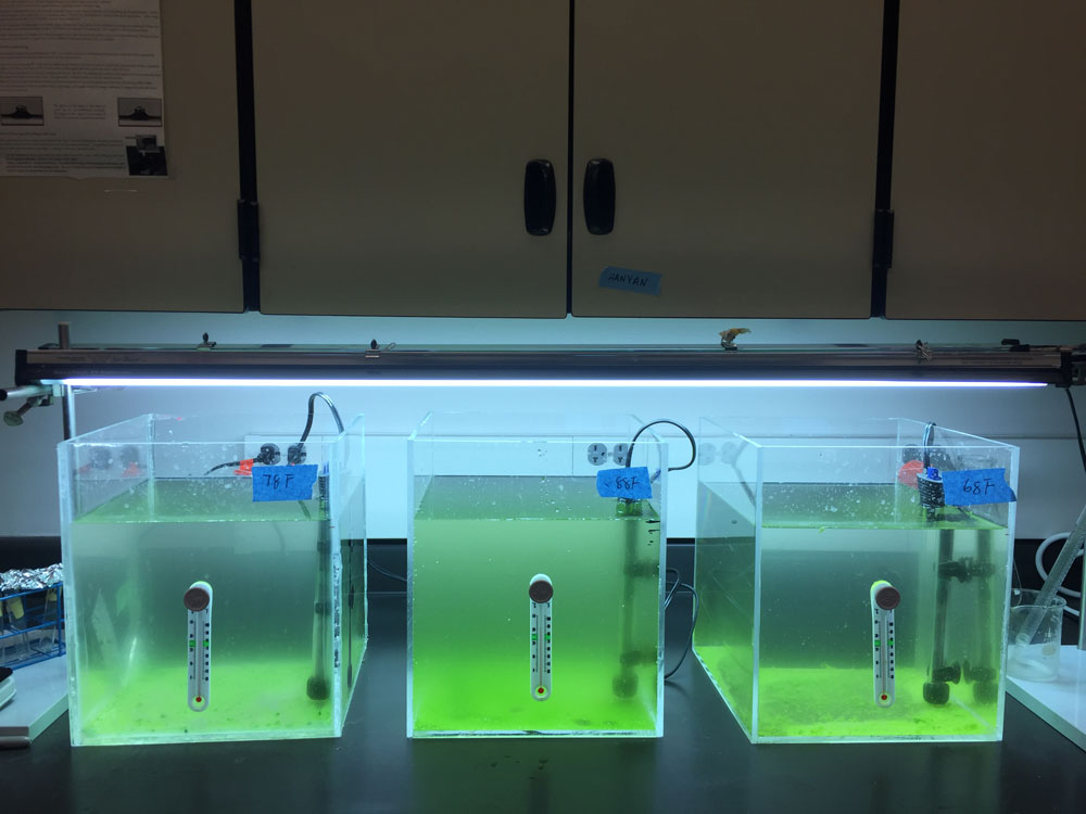 In a lab, there are three clear plastic square containers filled with green liquid, illuminated from the bottom to glow neon green. There's a thermometer on the all three containers front panel.